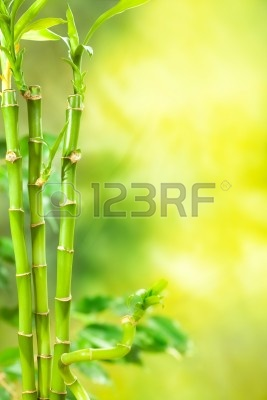 10582660-green-spa--bamboo-background